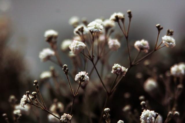 Flora Works